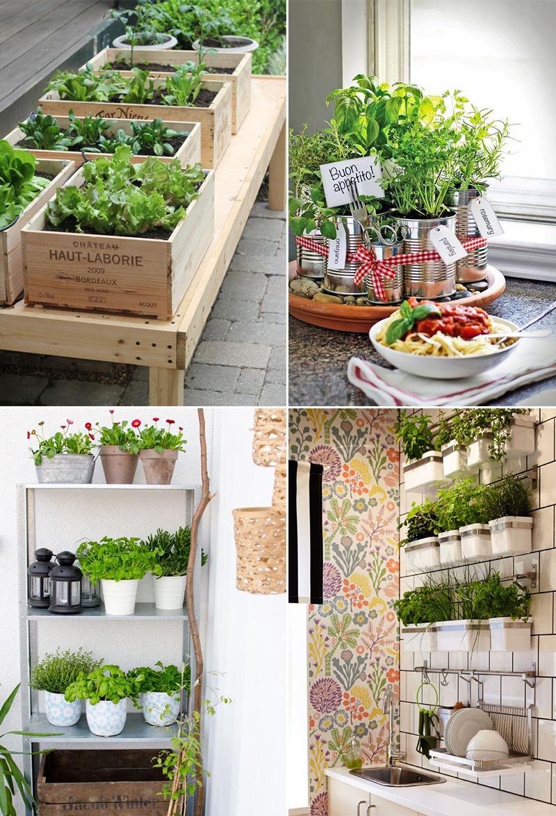 Come-coltivare-erbe-aromatiche-in-casa idee