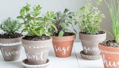 come coltivare erbe aromatiche in casa vasi decorati