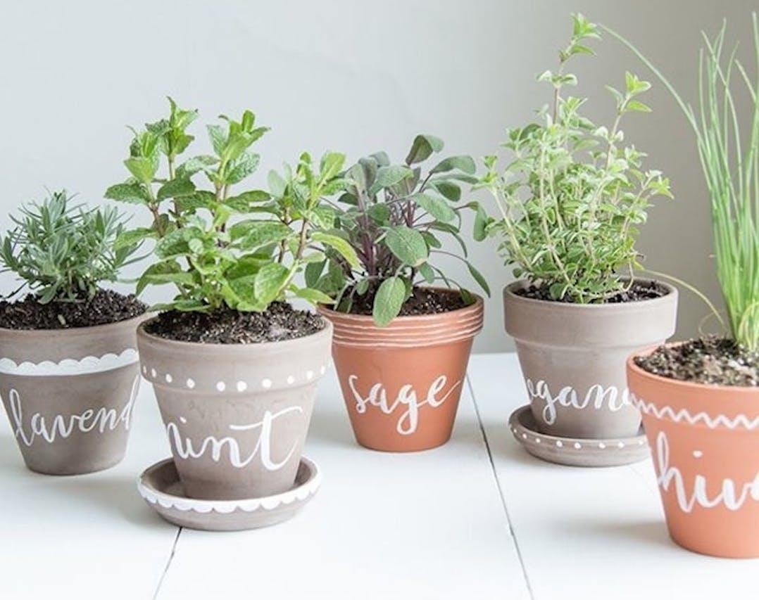 Coltivare In Casa Piante Aromatiche come coltivare erbe aromatiche in casa | la gatta sul tetto