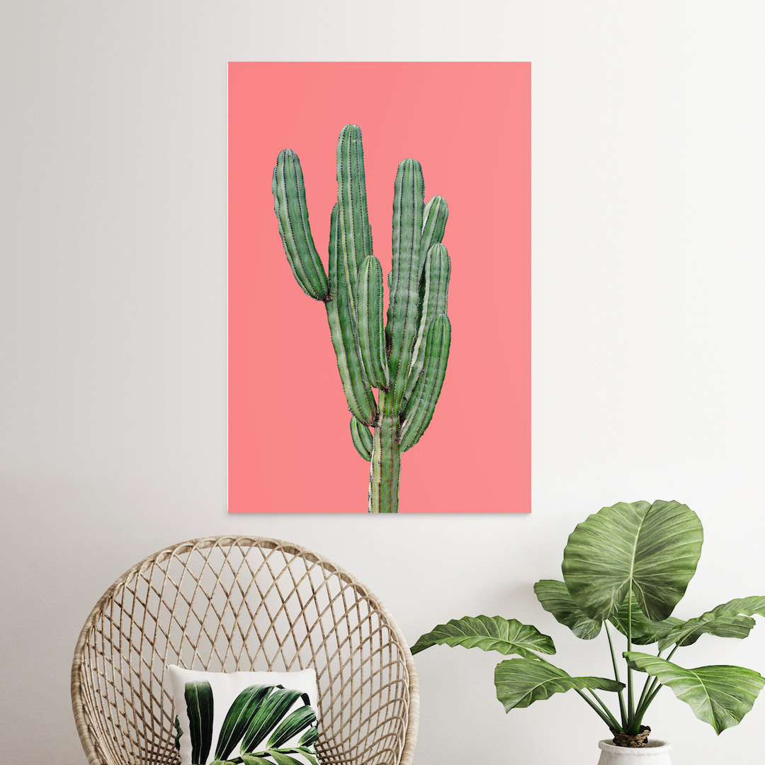 Posterlounge arriva in Italia cactus