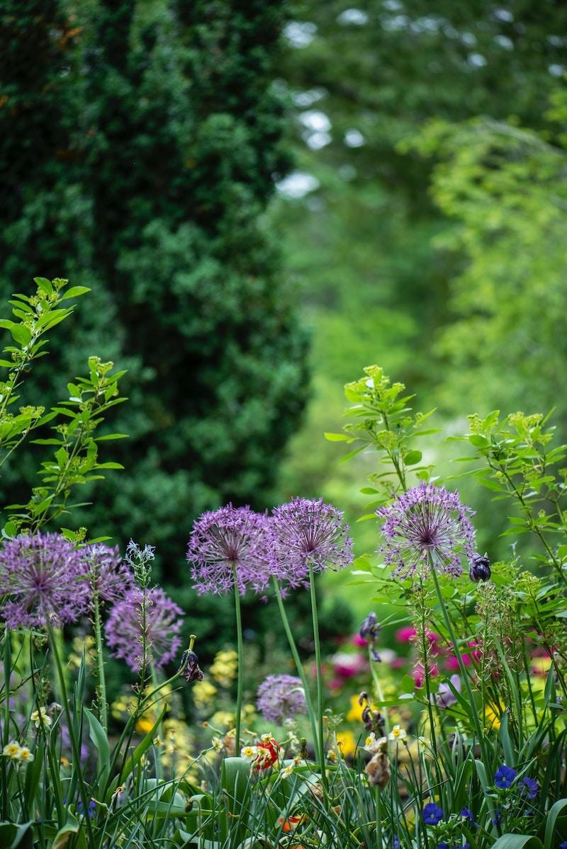 Piante Da Bordura Giardino giardino inglese: come realizzarlo in pochi passi   la gatta