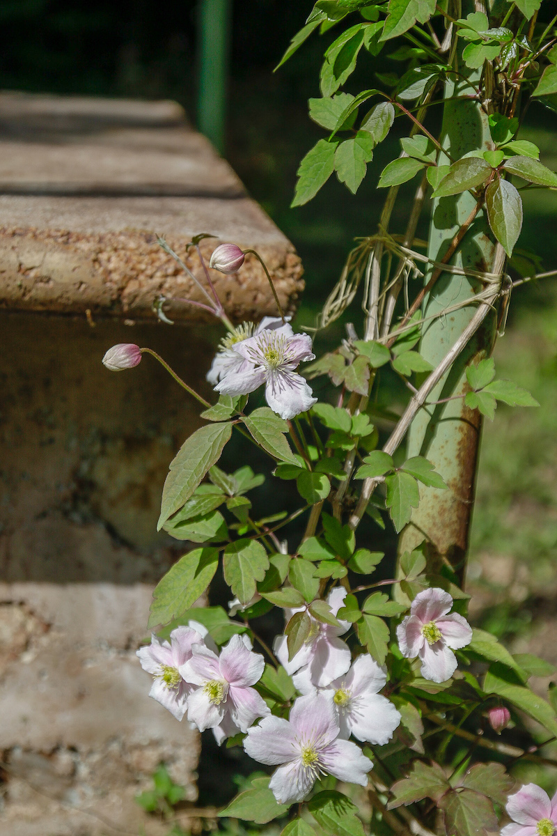 Come Fare Un Giardino Inglese giardino inglese: come realizzarlo in pochi passi   la gatta