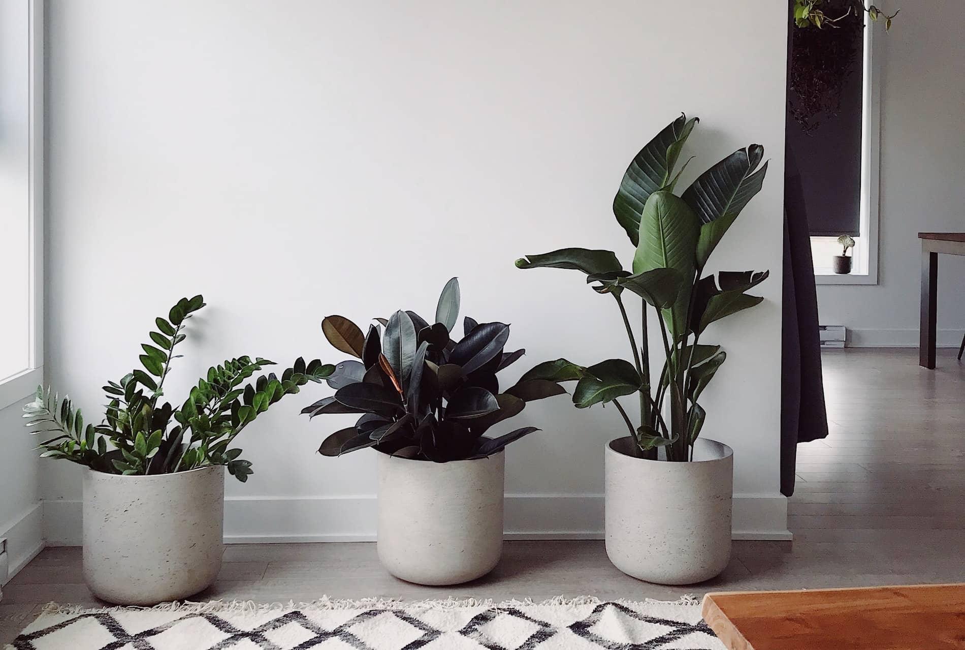 piante da appartamento